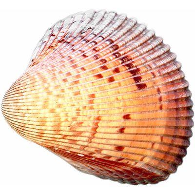 seashell meaning of seashell