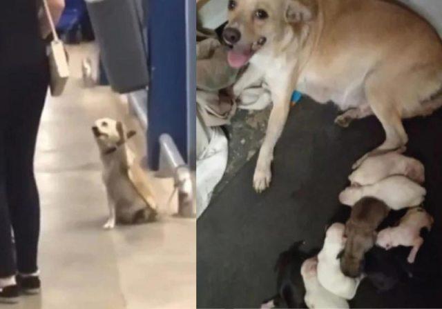 A cadelinha viralizou acenando para clientes em supermercado com seus 9 filhotinhos - Foto: arquivo pessoal
