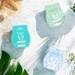 Introducing Fragrance Families Scent Organized By Preference Scentsy Blog