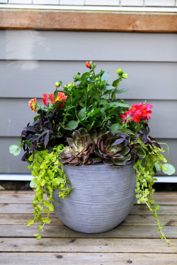 3 steps stunning container