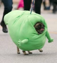 Halloween Dog - Slimer the Ghost Pug from Ghostbusters