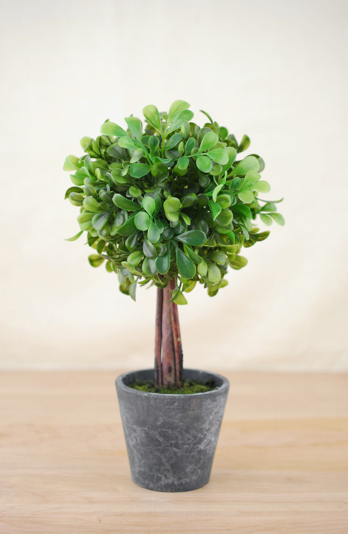Boxwood Topiary 10in