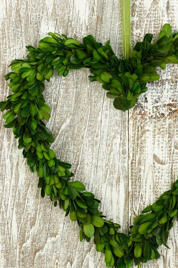 "Preserved Boxwood 11"" Heart Wreath"