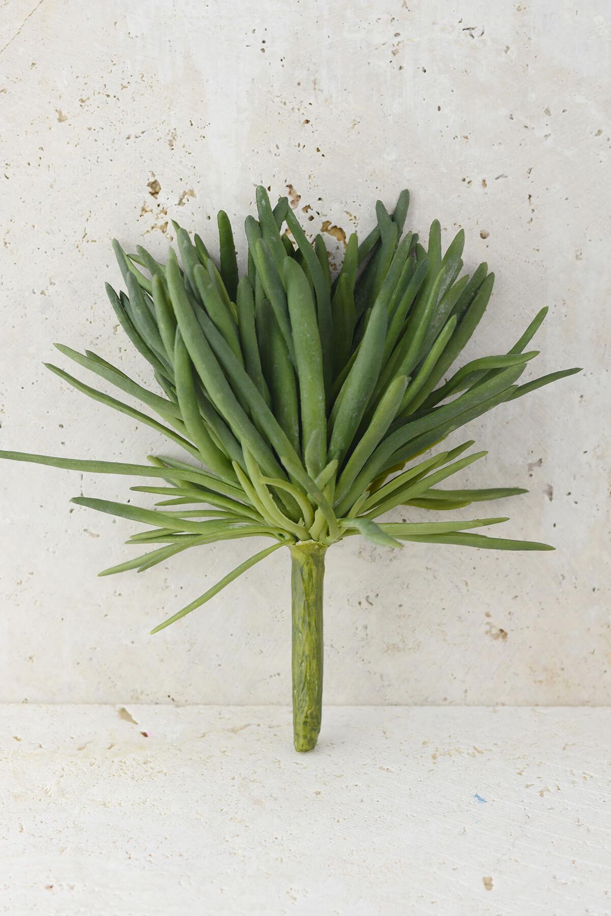 Succulents Blue Chalk Fingers Plant