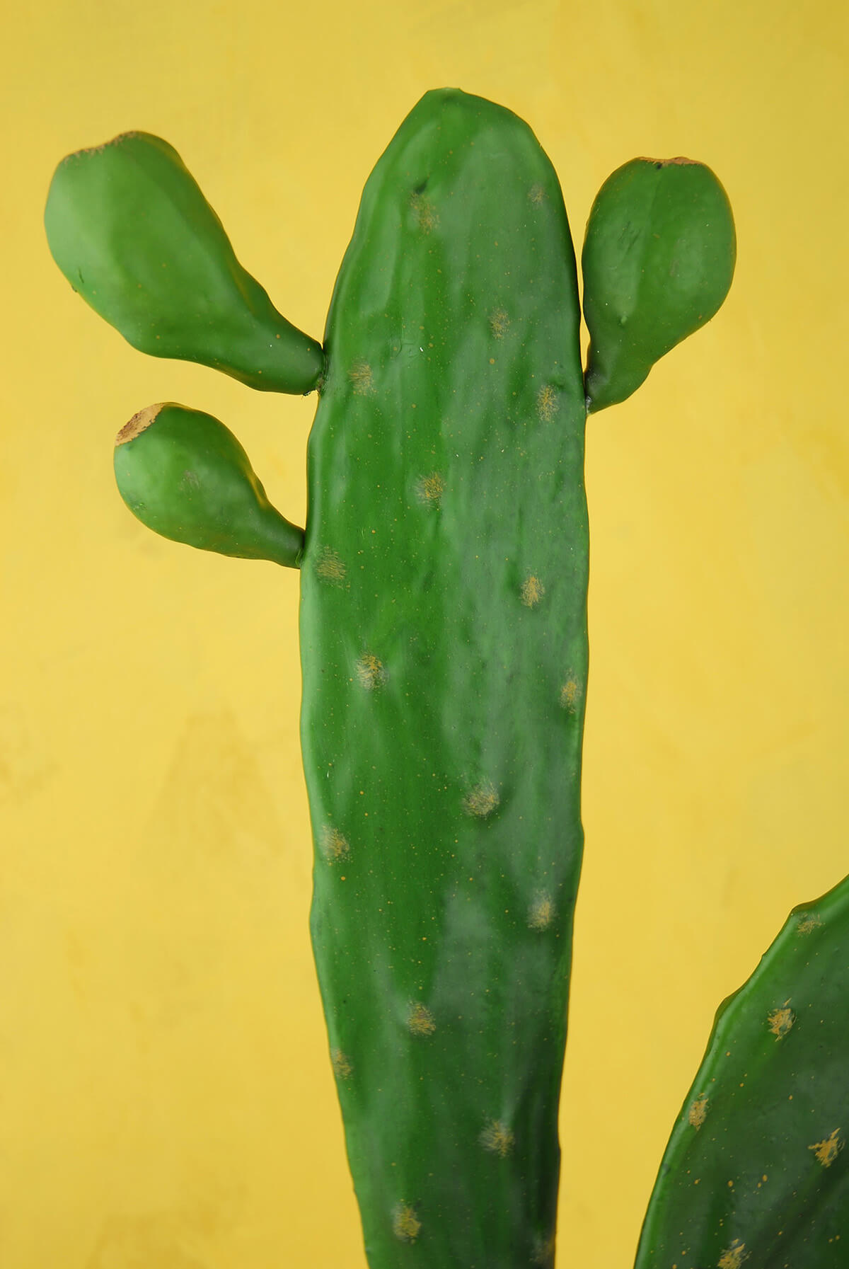 Tall 17 Cactus Stem Large