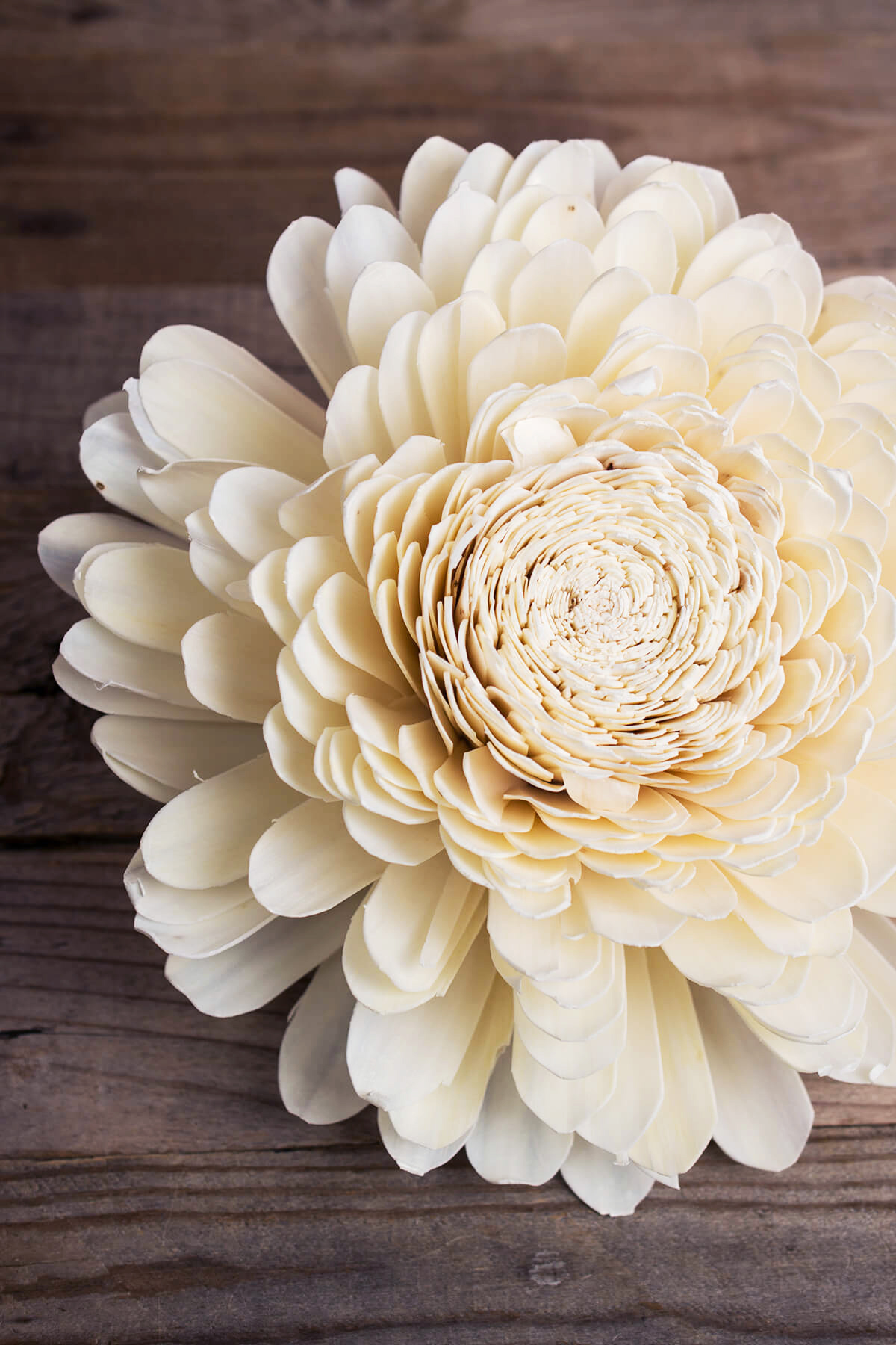 6 Large 11 Sola Belly Flowers