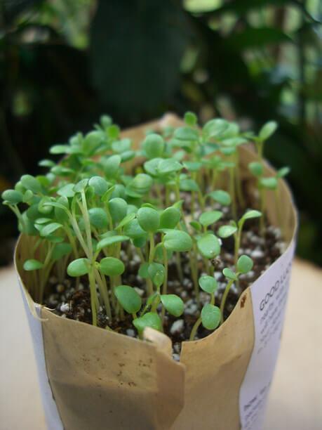 Good Luck Clover Seeds Garden In A Bag Growing Kit