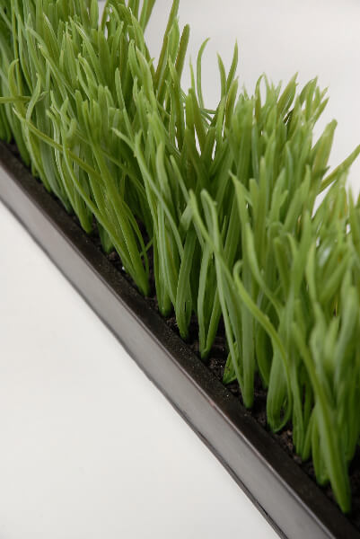 Narrow  Long Faux Grass Display in Metal Tray 255 long x 275 wide