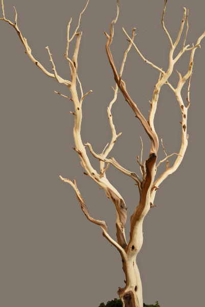 Manzanita Branches Sanded 21 38 Natural