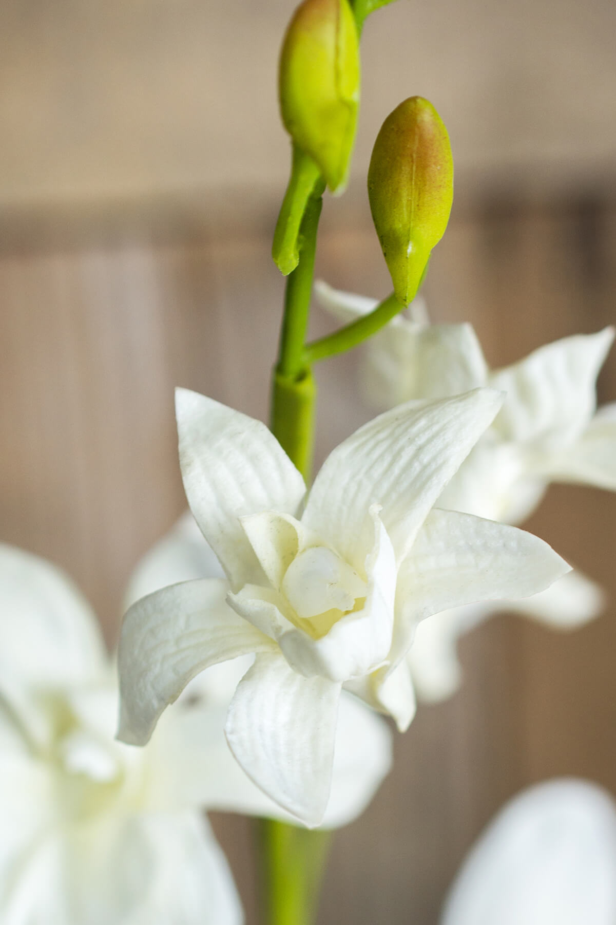 Natural Touch White Dendrobium Orchid Stem