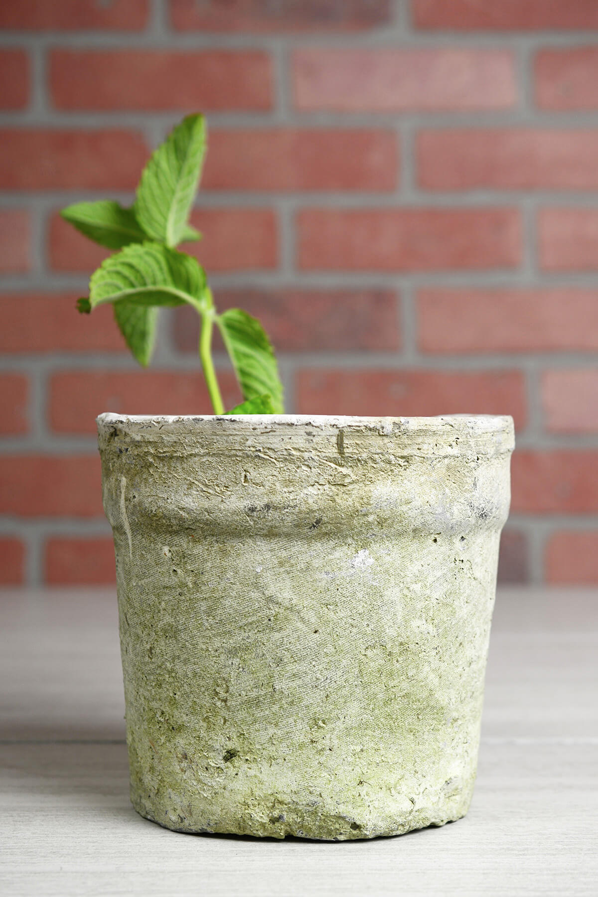 Clay Tall Flower Pots