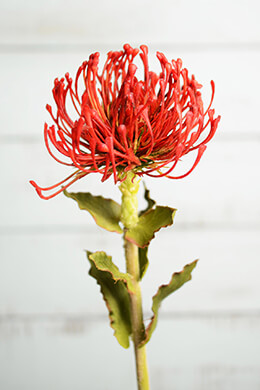 Artificial Protea Flower Red & Orange