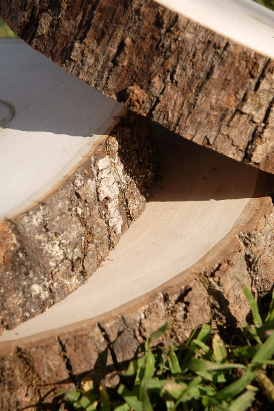Tree Slices Wood Round 79 with Bark Edges