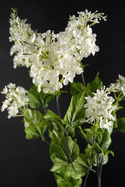 Lilac Spray Cream 29in