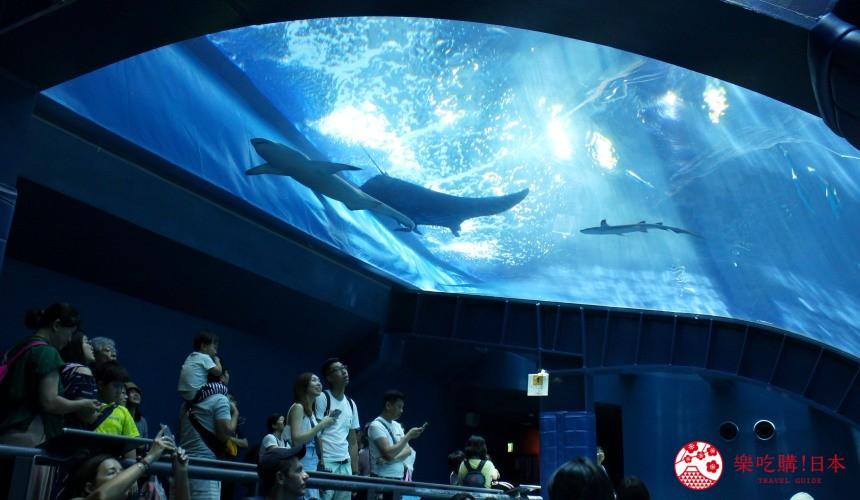 沖繩「美麗海水族館」攻略最完整:設施,票價,表演,餐廳最好玩的都告訴你!   樂吃購!日本