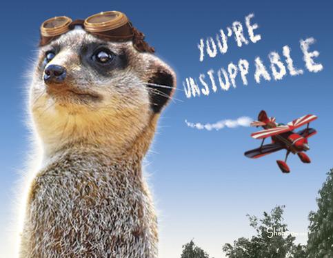 Funny Meerkat Aviator Encouragement Card Unstoppable on Storenvy