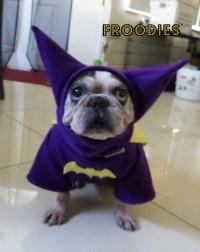 French Bulldog Boston Terrier Pug Dog Froodies Hoodies ...