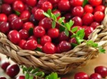 Cranberry / Großfruchtige Moosbeere 'Red Star' / 'Howes', 20-30 cm, Vaccinium macrocarpon 'Red Star' / 'Howes', Containerware