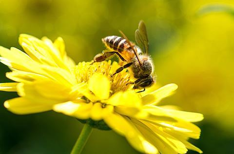 Fipronil Responsible For Historic Honeybee Die Off Research Chemistry World