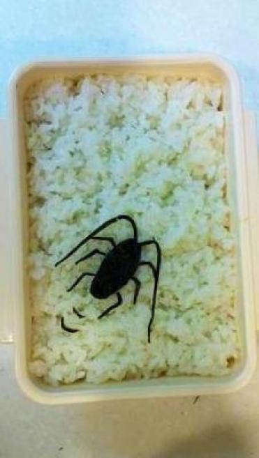 「ゴキブリご飯」の画像検索結果