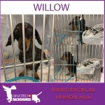 Willow - Critical Care
