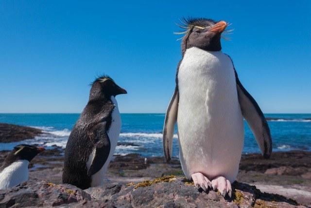 pingouins Patagonie