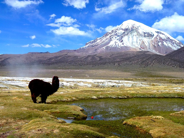 "Parc National Sajama © <a href=""https://www.flickr.com/photos/guellec31"" target=""_blank"">Léo Guellec</a>"