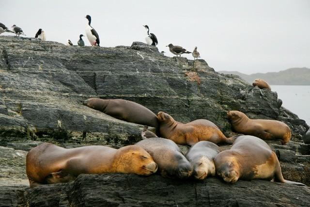 À Ushuaia les loups de mer sont détendus