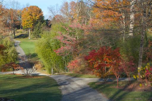 A Spectacular Japanese Maple Grove - The Martha Stewart Blog