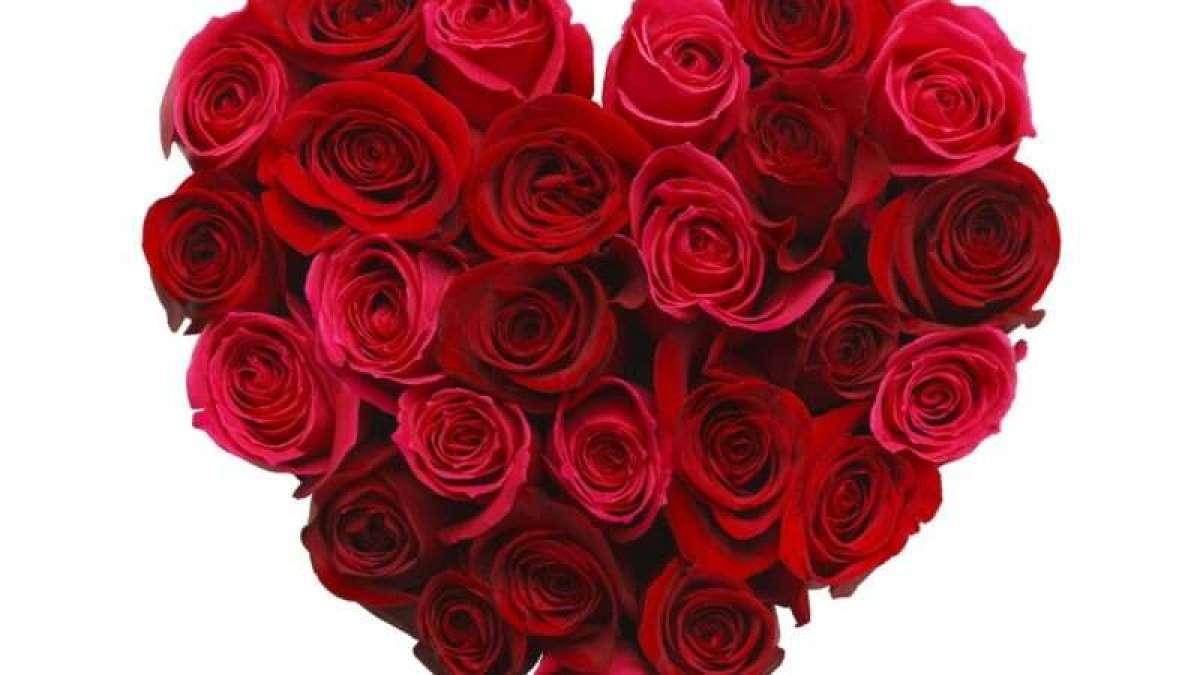 roses_1161x653