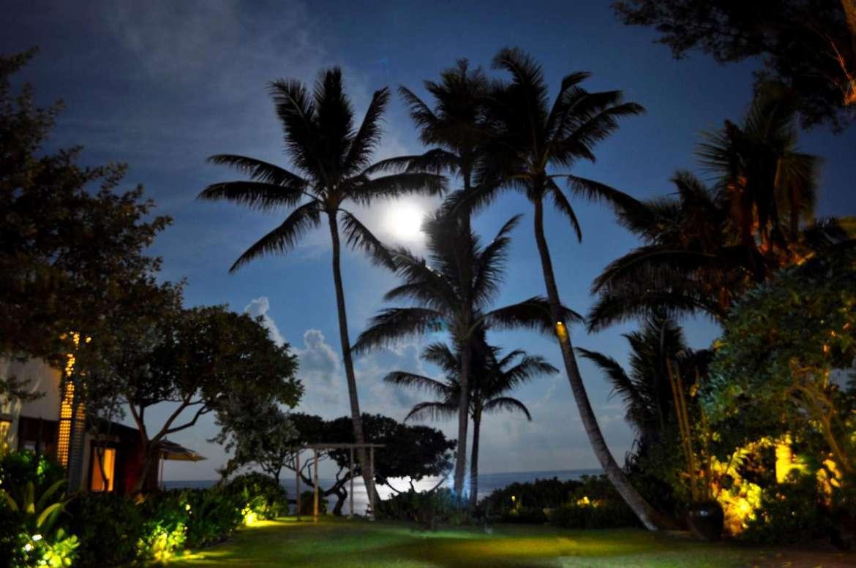 Moon light over garden area