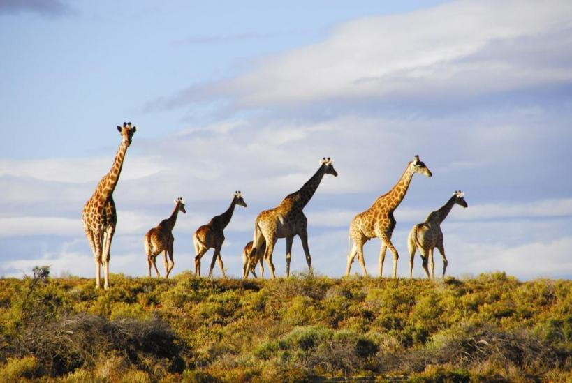 south african safari parks