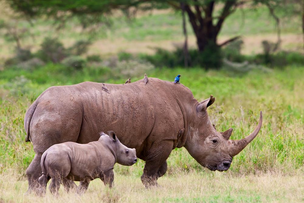 endangered animals in africa