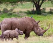 endangered animals in Africa rare endangered nature conservation