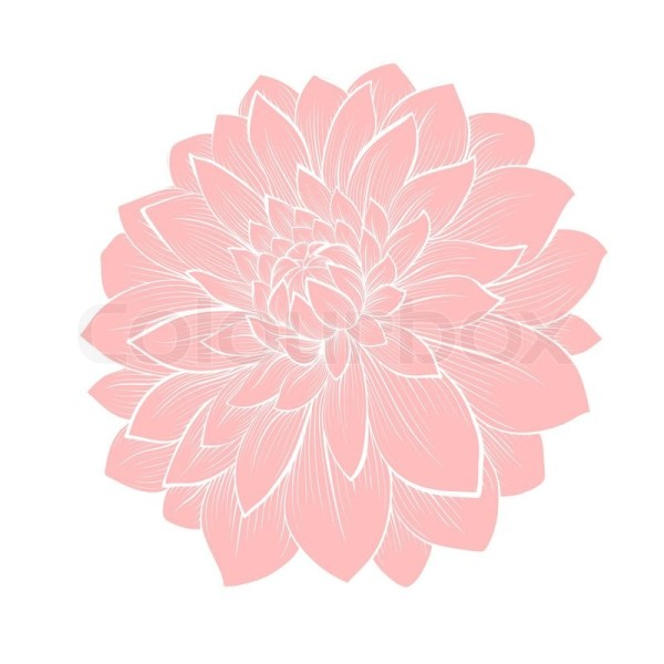 Beautiful dahlia flower isolated on white Handdrawn