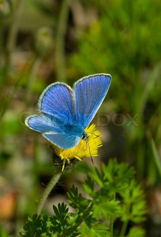 Cute Coffee Mug Wallpaper Butterfly Blue Summer Insect Stock Image Colourbox