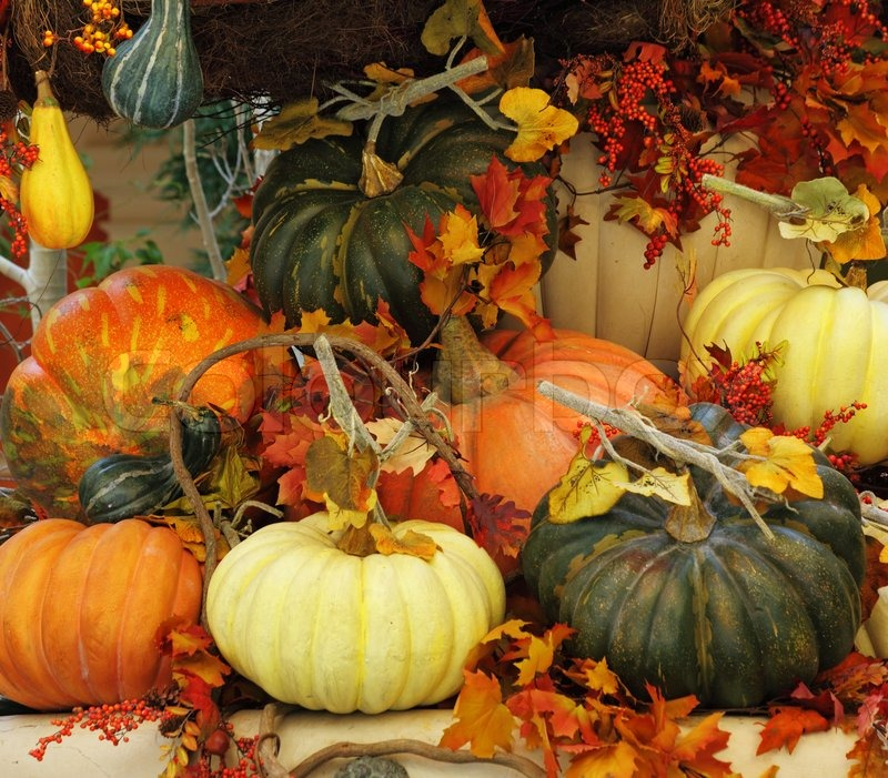 Pumpkins And Fall Leaves Wallpaper Winter Garden In A Lobby Of Magnificent Stock Image