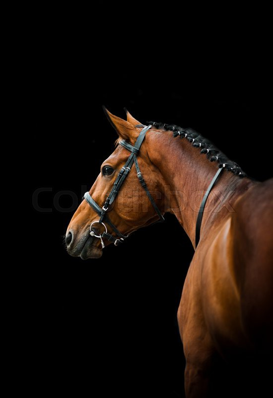 Bay thoroughbred dressage horse over a   Stock Photo