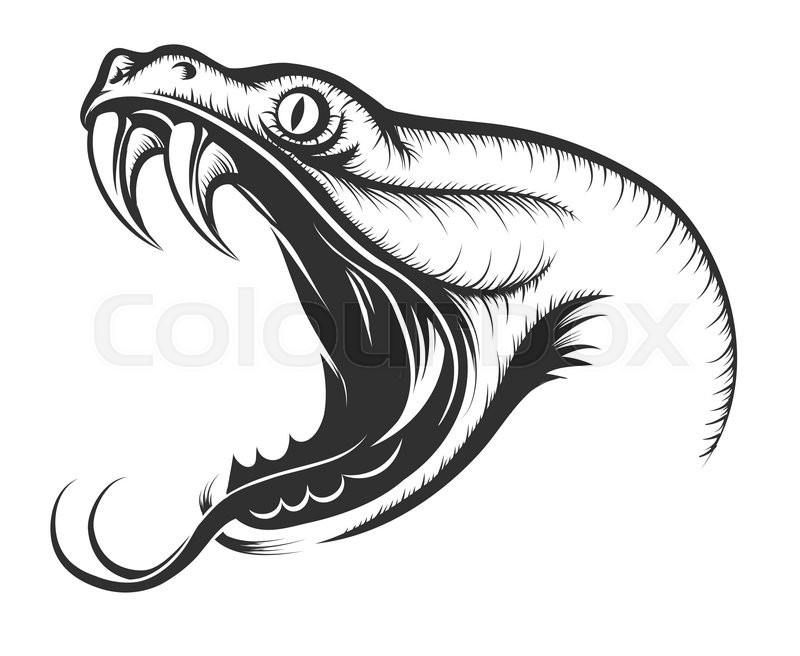 The head of Snake. Engraving style. Isolated on white