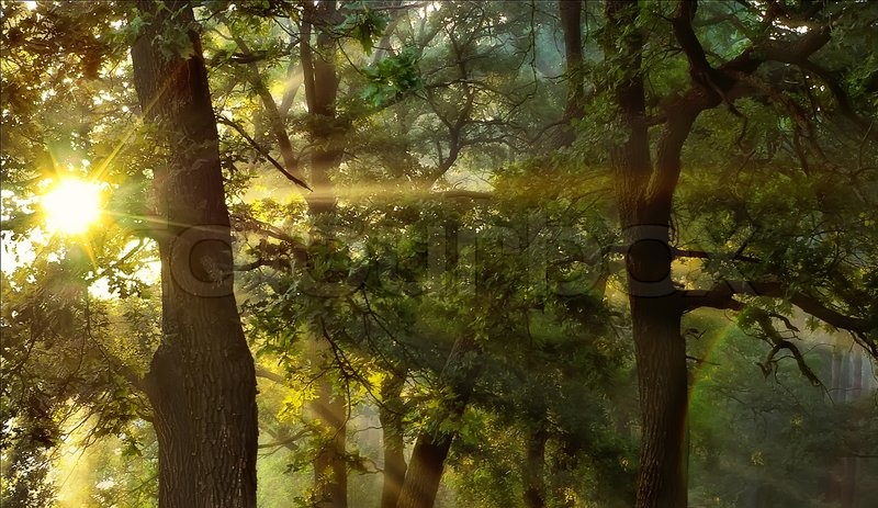 Autumn Tree Leaf Fall Animated Wallpaper Sunrise In The Oak Forest Sun Is Shiniig Through The Trees