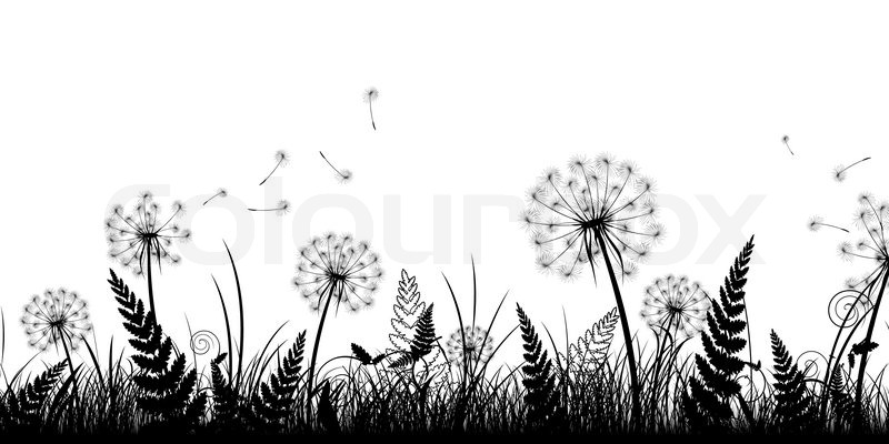 Summer field with grass and dandelions in black and white