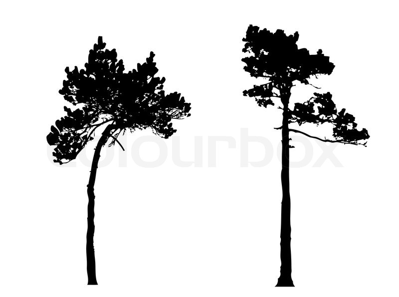 Silhouette Of The Pine In Wood Stock Vector Colourbox
