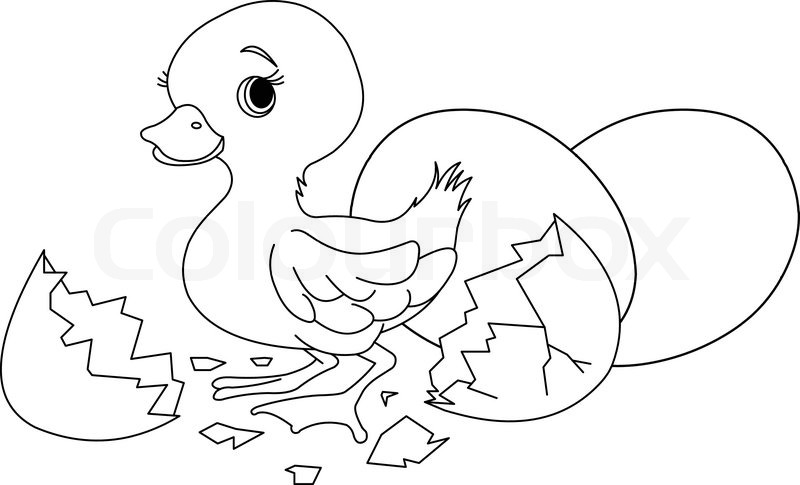 Easter duckling jumping out from broken egg. Coloring page