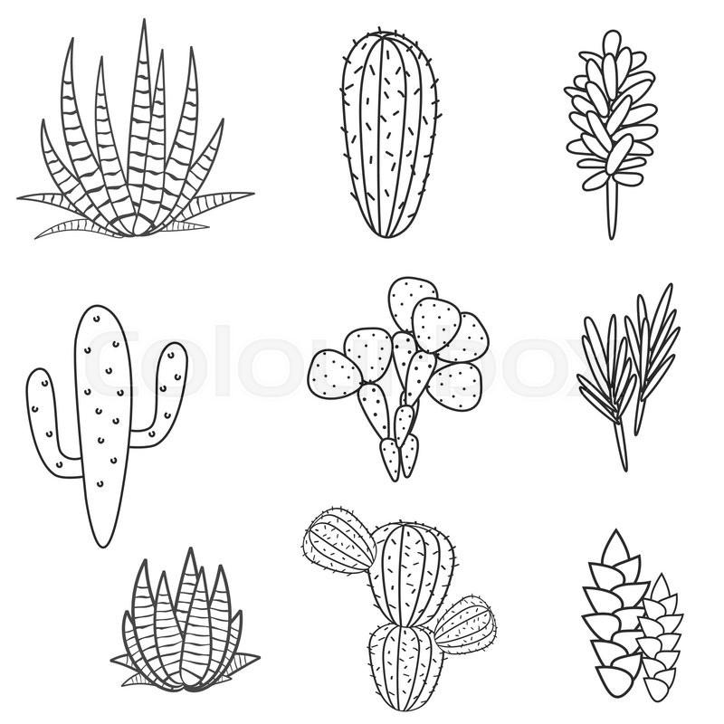 succulents cacti plant vector