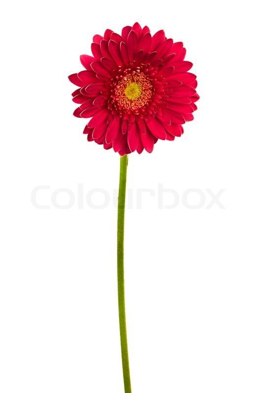 Foto Blumen Zum Geburtstag