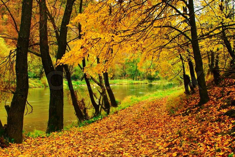 Vermont Fall Foliage Wallpaper Autumn Park With River Is Running Down In Autumnal Forest
