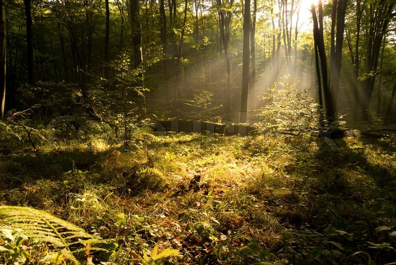 Gothic Fall Wallpaper Autumn Forest Landscape In The Morning Stock Photo