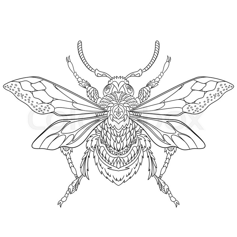 Zentangle stylized cartoon beetle insect, isolated on