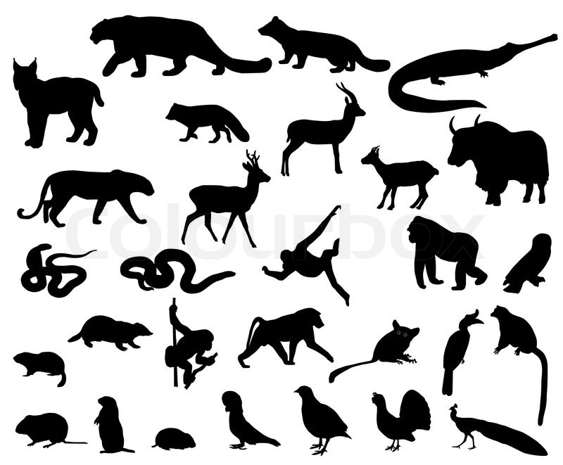 Collection of silhouettes of animals living in the