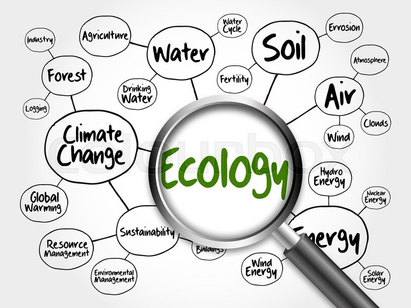 Ecology mind map flowchart concept with magnifying glass